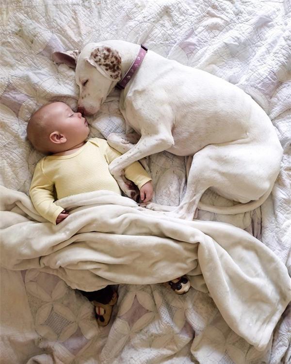 Картинки по запросу малыш спит с собакой