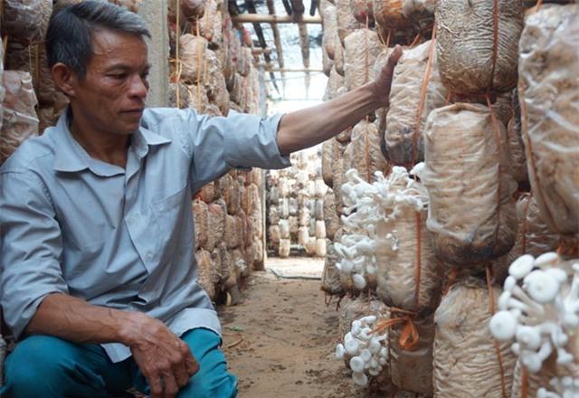 Từ người làm thuê trở thành chủ trang trại nấm tiền tỷ - Ảnh 1.