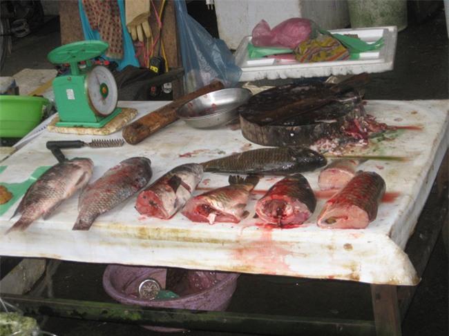 Nhận biết thịt lợn và cá có chứa độc tố bằng mắt thường - Ảnh 2.