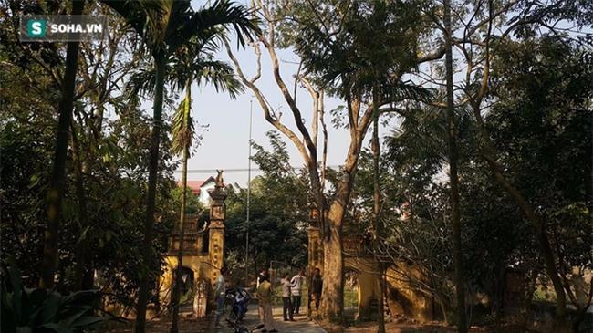 Cận cảnh cây sưa 50 tỷ trong vụ đánh nhau chảy máu đầu tại cuộc họp ở Bắc Ninh - Ảnh 1.