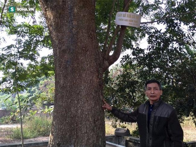 Cận cảnh cây sưa 50 tỷ trong vụ đánh nhau chảy máu đầu tại cuộc họp ở Bắc Ninh - Ảnh 10.