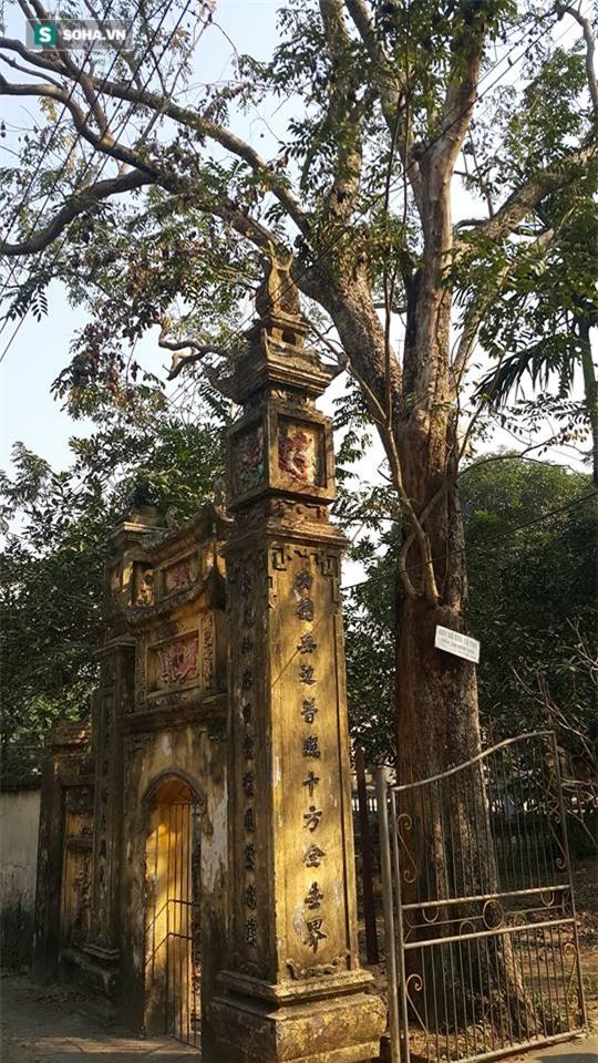 Cận cảnh cây sưa 50 tỷ trong vụ đánh nhau chảy máu đầu tại cuộc họp ở Bắc Ninh - Ảnh 2.