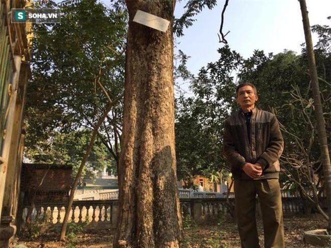 Cận cảnh cây sưa 50 tỷ trong vụ đánh nhau chảy máu đầu tại cuộc họp ở Bắc Ninh - Ảnh 6.