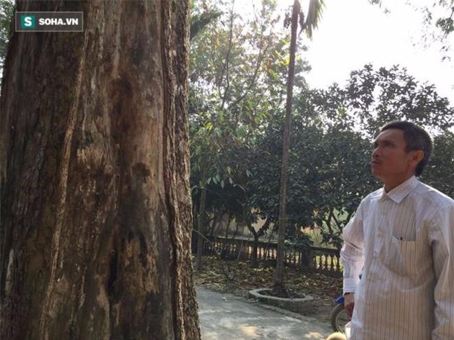 Cận cảnh cây sưa 50 tỷ trong vụ đánh nhau chảy máu đầu tại cuộc họp ở Bắc Ninh - Ảnh 7.