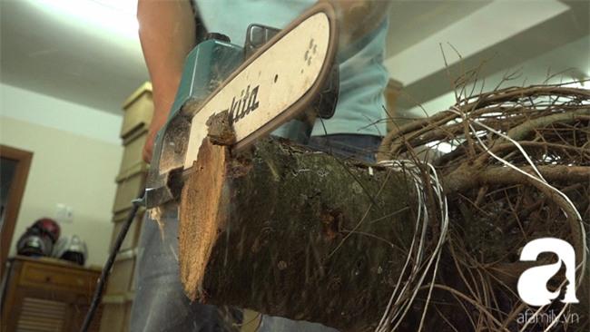 Cận Giáng sinh, cây thông Noel thật nhập từ Mỹ, giá bạc triệu vẫn hút hàng ở Sài Gòn - Ảnh 2.