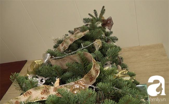 Cận Giáng sinh, cây thông Noel thật nhập từ Mỹ, giá bạc triệu vẫn hút hàng ở Sài Gòn - Ảnh 3.