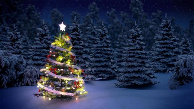 Hé lộ sự thật ít người biết về cây thông Noel đang xuất hiện ở khắp nơi trên thế giới - Ảnh 1.