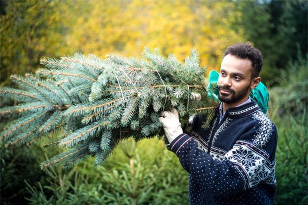 Hé lộ sự thật ít người biết về cây thông Noel đang xuất hiện ở khắp nơi trên thế giới - Ảnh 4.