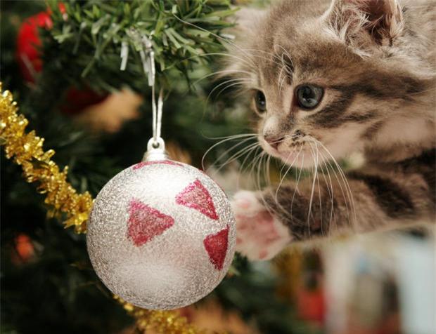 Hé lộ sự thật ít người biết về cây thông Noel đang xuất hiện ở khắp nơi trên thế giới - Ảnh 7.
