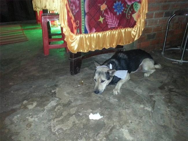 Chủ nhân qua đời, chú chó trung thành bỏ ăn đến chết khiến nhiều người xót xa - Ảnh 2.