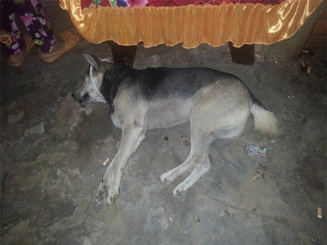Chủ nhân qua đời, chú chó trung thành bỏ ăn đến chết khiến nhiều người xót xa - Ảnh 3.