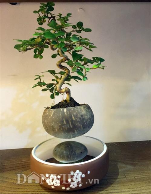 """mat chu a mom chu o"" xem sieu pham bonsai bay giua ha thanh hinh anh 7"
