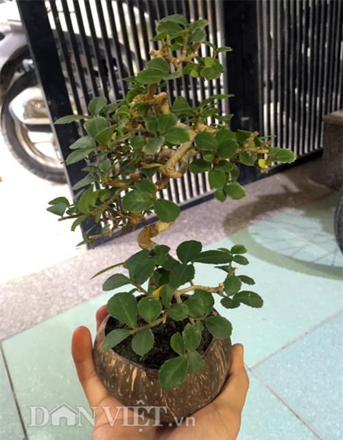 """mat chu a mom chu o"" xem sieu pham bonsai bay giua ha thanh hinh anh 5"