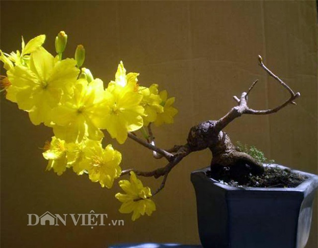 """mat chu a mom chu o"" xem sieu pham bonsai bay giua ha thanh hinh anh 6"