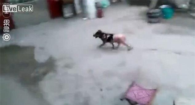 Video chú chó vùng dậy chạy thoát dù bị luộc sống, vặt lông khiến nhiều người xót xa - Ảnh 3.