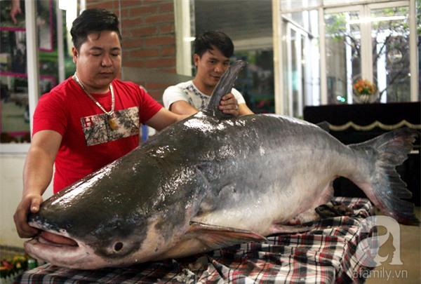 Nhà giàu Hà Nội bỏ cả trăm triệu mua cá khổng lồ về ăn Tết - Ảnh 1.