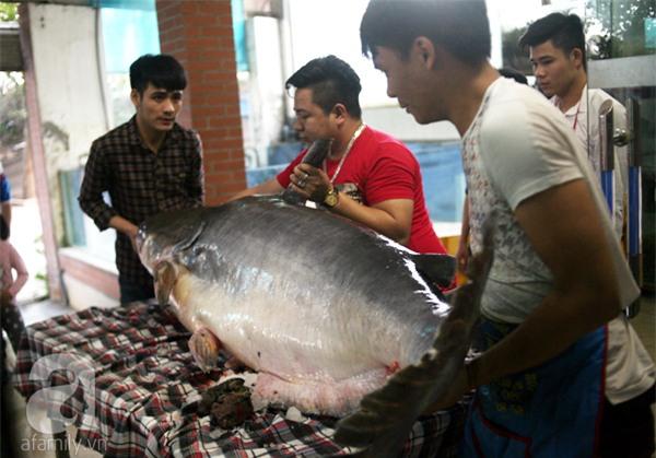 Nhà giàu Hà Nội bỏ cả trăm triệu mua cá khổng lồ về ăn Tết - Ảnh 2.