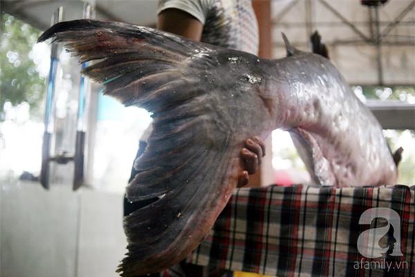 Nhà giàu Hà Nội bỏ cả trăm triệu mua cá khổng lồ về ăn Tết - Ảnh 3.