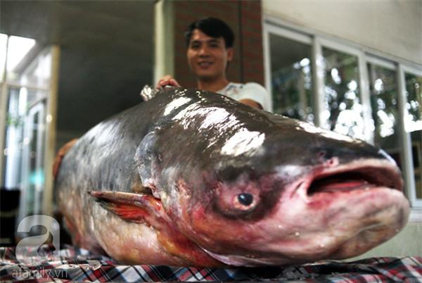 Nhà giàu Hà Nội bỏ cả trăm triệu mua cá khổng lồ về ăn Tết - Ảnh 6.