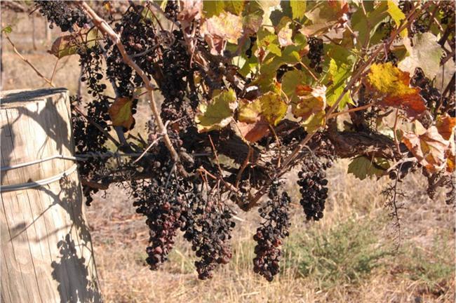 4 loại mứt, trái cây sấy nhập ngoại khiến chị em sốt xình xịch dịp Tết 2017 - Ảnh 3.