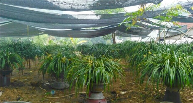 Vườn địa lan hơn 50 tỷ trên đỉnh trời Sapa