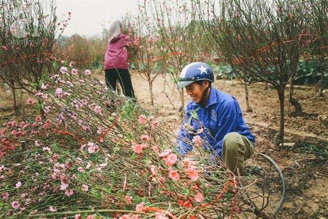Rằm tháng Chạp, đã thấy nôn nao vị Tết khi hoa đào về trên phố xuân - Ảnh 14.