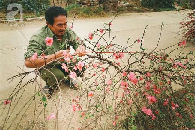 Rằm tháng Chạp, đã thấy nôn nao vị Tết khi hoa đào về trên phố xuân - Ảnh 15.
