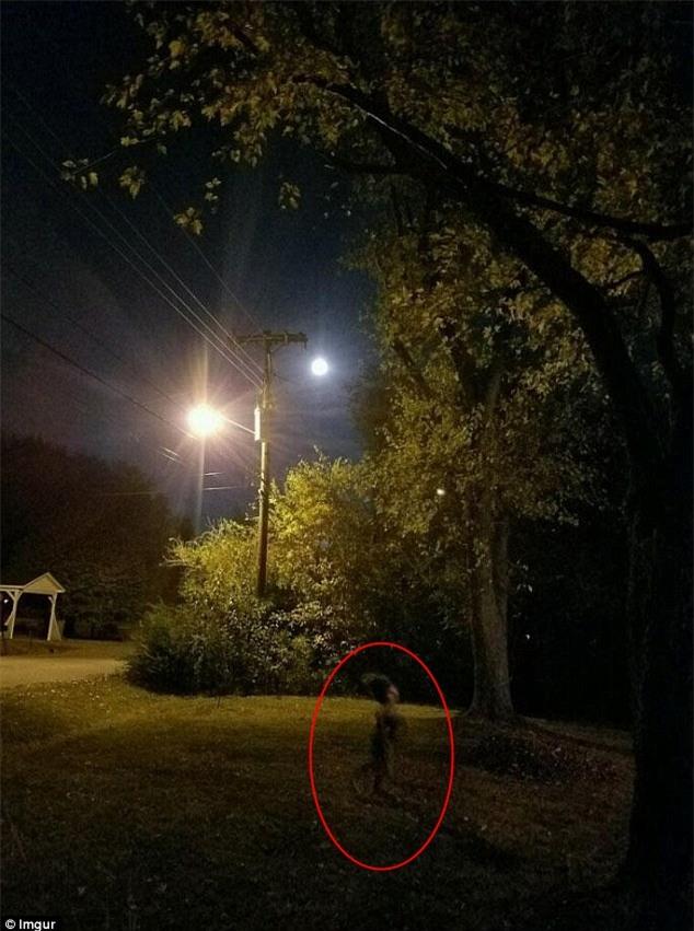 Sinh vật kỳ bí xuất hiện đêm trăng tròn khiến cả mạng xã hội tá hỏa - Ảnh 1.