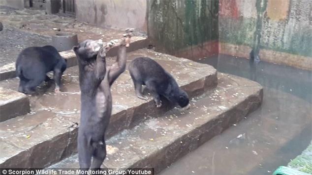 Nghẹn lòng nhìn những chú gấu chó chết đói, cầu xin thức ăn từ du khách đầy thương tâm - Ảnh 2.