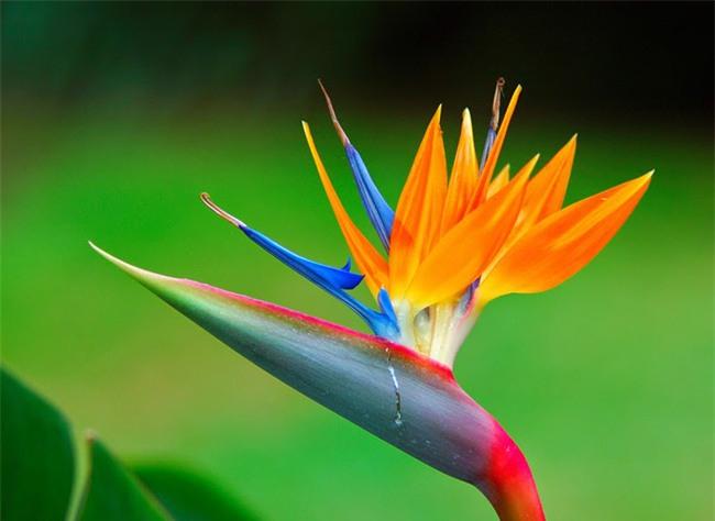 3 loài hoa quý nhà nhà dùng để trưng Tết nhưng cực độc với trẻ con - Ảnh 3.
