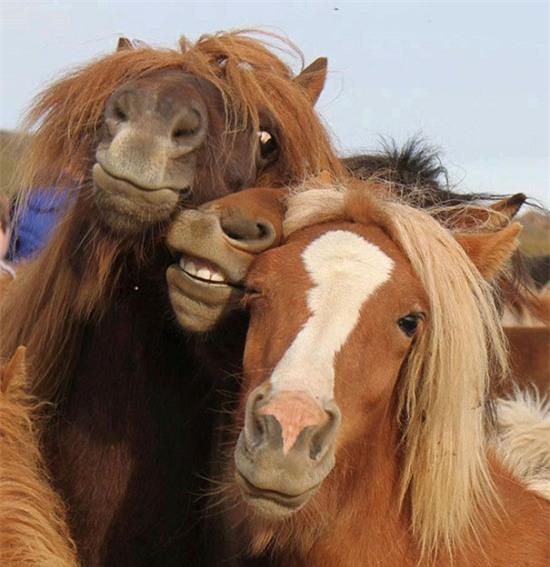Cười nghiêng ngả với loạt ảnh tự sướng cực cool của động vật - Ảnh 21.