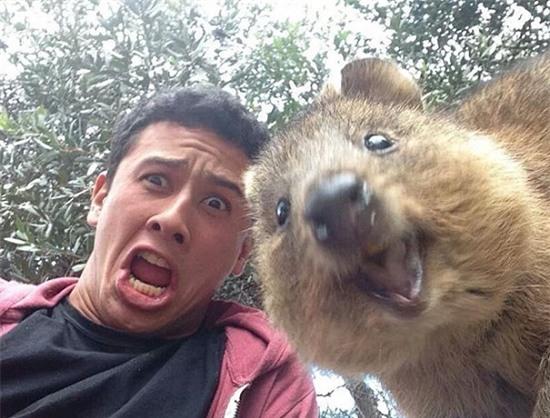 Cười nghiêng ngả với loạt ảnh tự sướng cực cool của động vật - Ảnh 7.