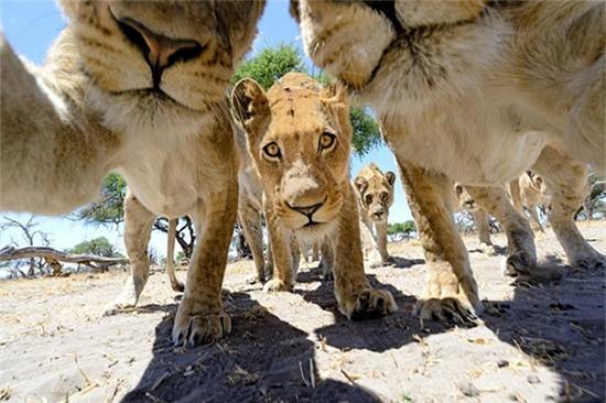 Cười nghiêng ngả với loạt ảnh tự sướng cực cool của động vật - Ảnh 11.