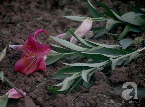 Hà Nội: Nông dân Tây Tựu phát khóc vì hoa ly nở sớm, rụng đỏ ruộng trước Tết - Ảnh 5.
