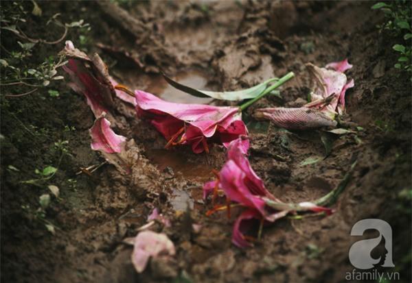 Hà Nội: Nông dân Tây Tựu phát khóc vì hoa ly nở sớm, rụng đỏ ruộng trước Tết - Ảnh 8.