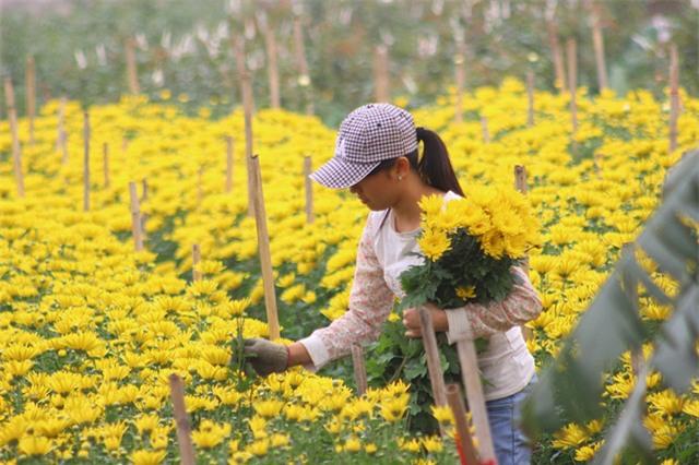 4 làng hoa đẹp long lanh ngay ven Hà Nội nên ghé đến để cảm nhận rõ vị Xuân - Ảnh 3.