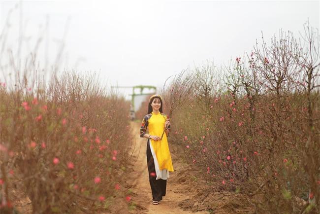 4 làng hoa đẹp long lanh ngay ven Hà Nội nên ghé đến để cảm nhận rõ vị Xuân - Ảnh 7.