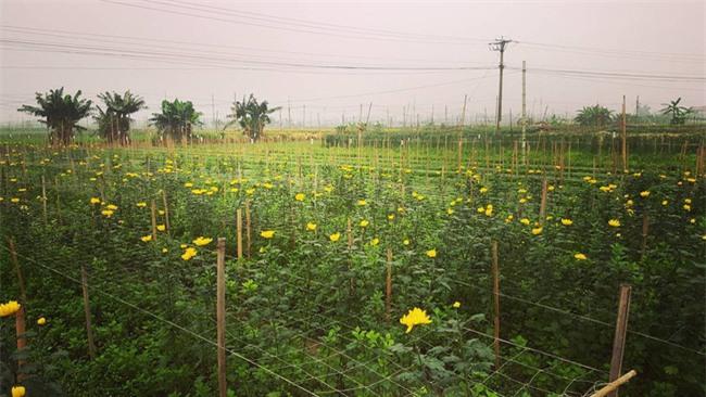 4 làng hoa đẹp long lanh ngay ven Hà Nội nên ghé đến để cảm nhận rõ vị Xuân - Ảnh 9.