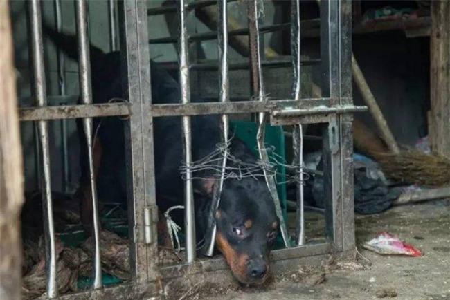 Giải thoát cho chó dữ, bị con vật vô ơn quay lại tấn công, cô bé 14 tuổi phải khâu 120 mũi - Ảnh 3.