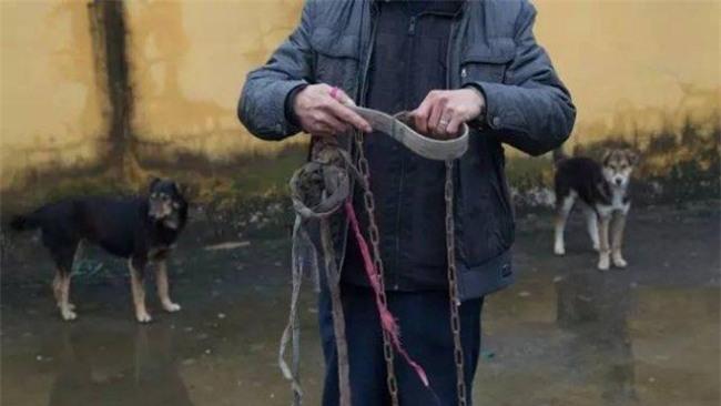 Giải thoát cho chó dữ, bị con vật vô ơn quay lại tấn công, cô bé 14 tuổi phải khâu 120 mũi - Ảnh 4.