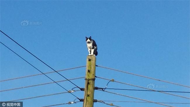Anh: Ngắt điện cả khu vực để giải cứu chú mèo bị mắc kẹt trên cột điện suốt 24 tiếng đồng hồ - Ảnh 1.