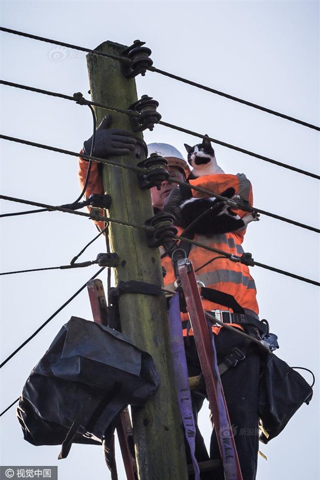 Anh: Ngắt điện cả khu vực để giải cứu chú mèo bị mắc kẹt trên cột điện suốt 24 tiếng đồng hồ - Ảnh 10.