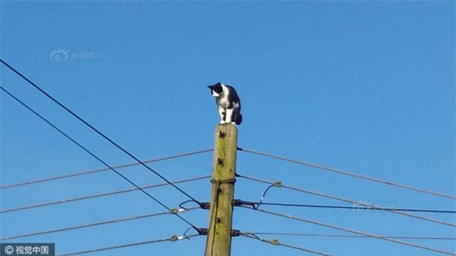 Anh: Ngắt điện cả khu vực để giải cứu chú mèo bị mắc kẹt trên cột điện suốt 24 tiếng đồng hồ - Ảnh 2.
