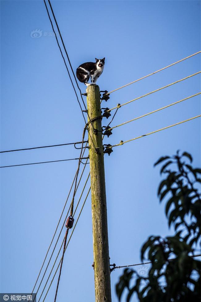 Anh: Ngắt điện cả khu vực để giải cứu chú mèo bị mắc kẹt trên cột điện suốt 24 tiếng đồng hồ - Ảnh 3.
