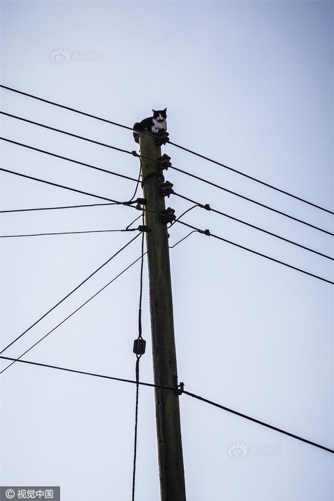 Anh: Ngắt điện cả khu vực để giải cứu chú mèo bị mắc kẹt trên cột điện suốt 24 tiếng đồng hồ - Ảnh 4.