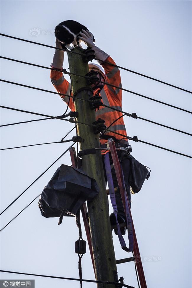 Anh: Ngắt điện cả khu vực để giải cứu chú mèo bị mắc kẹt trên cột điện suốt 24 tiếng đồng hồ - Ảnh 8.