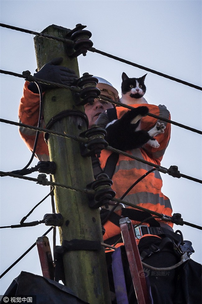 Anh: Ngắt điện cả khu vực để giải cứu chú mèo bị mắc kẹt trên cột điện suốt 24 tiếng đồng hồ - Ảnh 9.