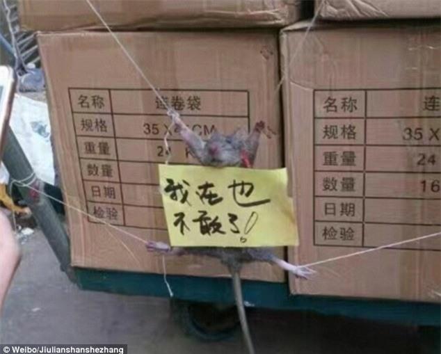 Can tội ăn trộm gạo trong cửa hàng tiện lợi, chú chuột bị trói buộc và bêu rếu trên mạng xã hội - Ảnh 2.