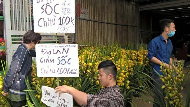 Địa lan Trung Quốc nhập ồ ạt tại Hà Nội, giá bán siêu rẻ chỉ còn 100.000 đồng/cành, rẻ nhất trên thị trường