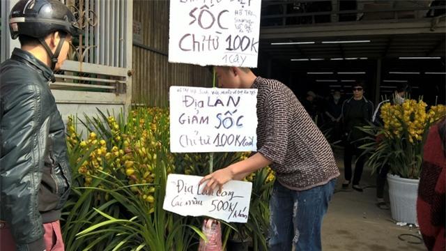 Nhiều nhân viên bán hàng cho hay, lúc cao điểm mua sắm như 29 hoặc 30 Tết, giá địa lan Trung Quốc sẽ được giảm nữa.
